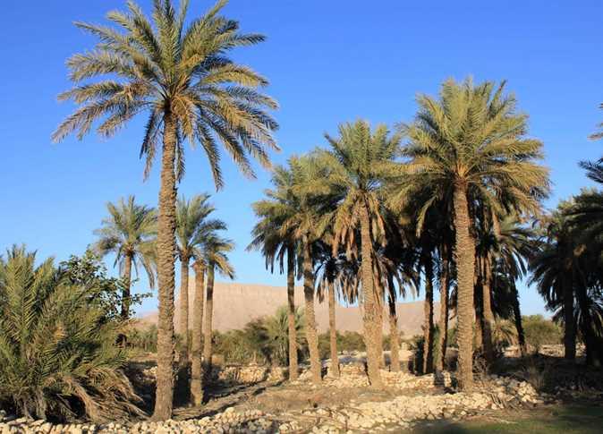 al-Wadi al-Jadid