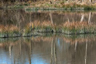 Adel Dam Nature Reserve