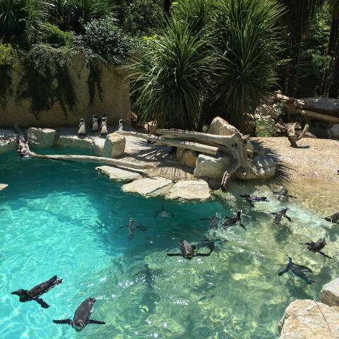 Trfihi Parks | Parks | Giardino Zoologico di Pistoia