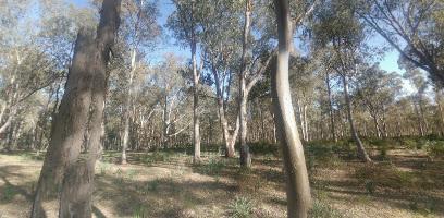 غابة سيجنان