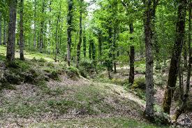 اخبار عن Forêt de l'Akfadou