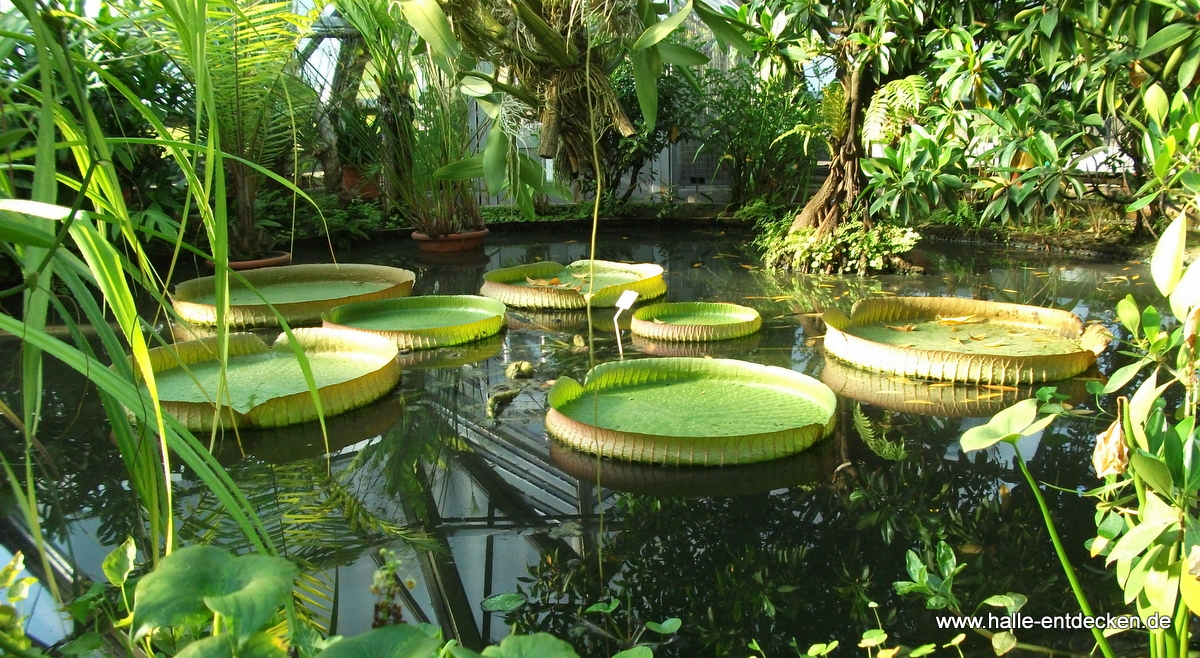 Trfihi Parks Parks Botanischer Garten Halle