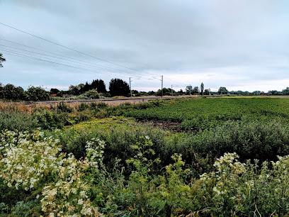 Waterbeach Hyacinth Park