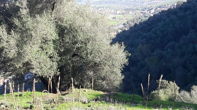 Sidi Ali Bounab