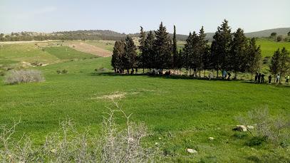 Forêt de Teboursouk