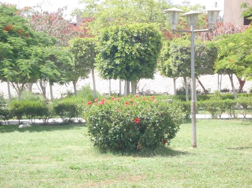 حديقة العاشر من رمضان