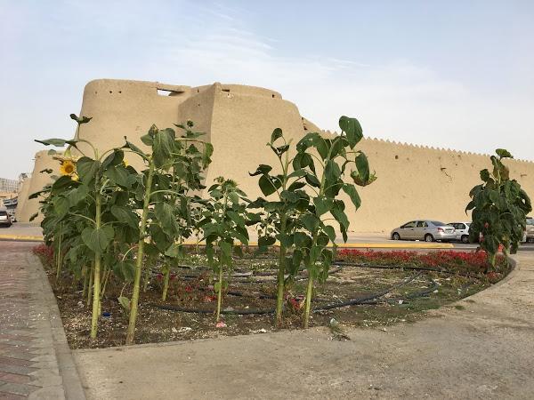 The Ibrahim Palace Archaeological Park