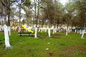 Shawashi Forest