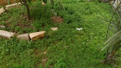حديقة الأمير حمزة