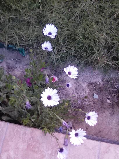 Sulaymaniyah garden