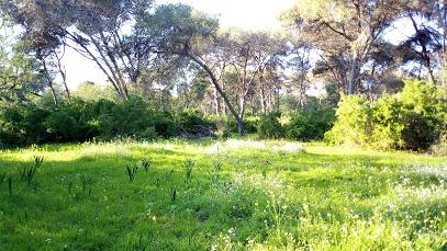 منتزه غابة هرهورة