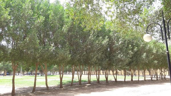 AL Rabwa Park