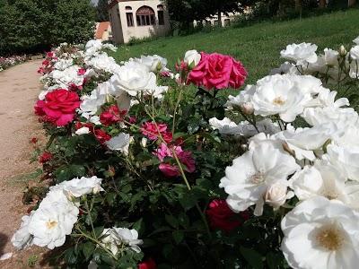 Lalla Amina Garden