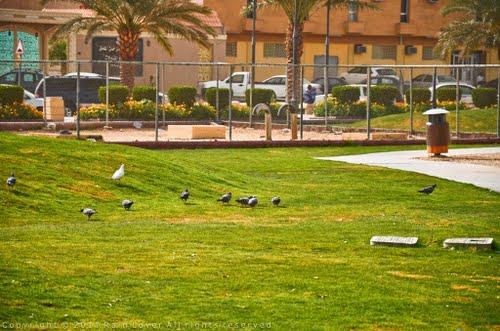 حديقة الروضة العامة