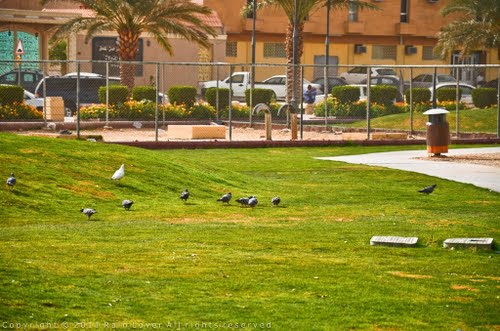 AL Rawda Public Park