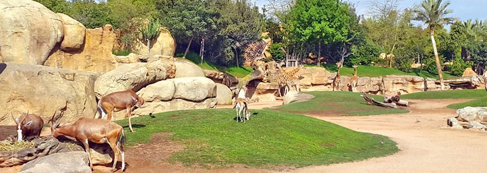 حديقة حيوان عين السبع