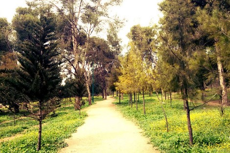 Ghabet Al Shabab Park