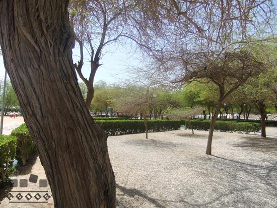 حديقة محمد بن القاسم