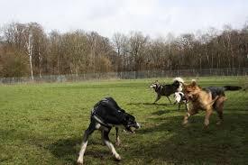 Hundefreilaufwiese