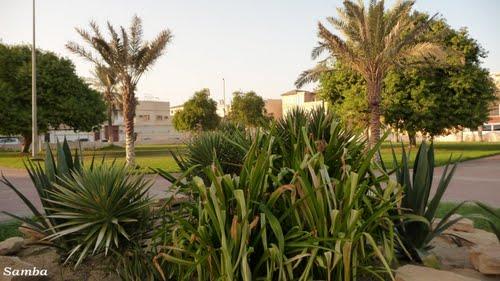 Rawdah Park