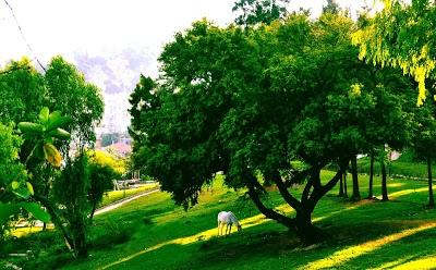Tifariti Park