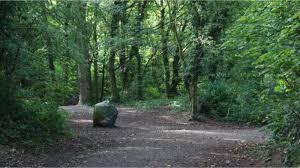 Sunbank Wood