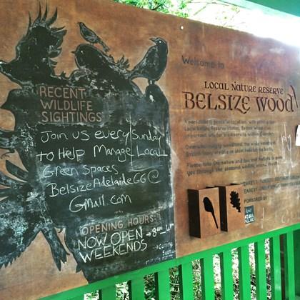 Belsize Wood