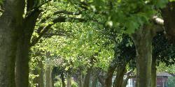 Bolton Road Park