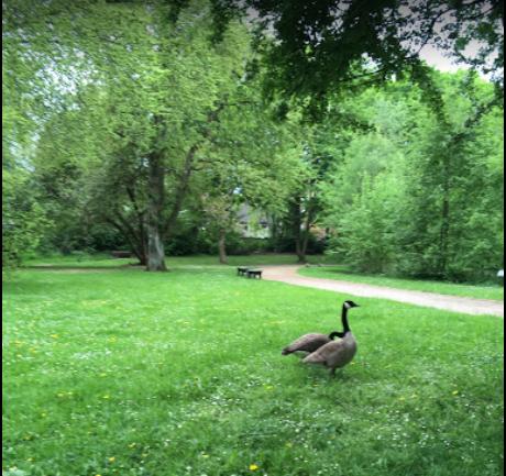 Flora Park - Herne