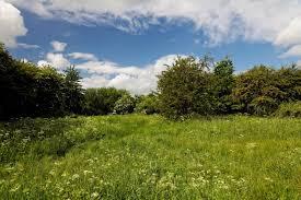 Bramblefields local nature reserve