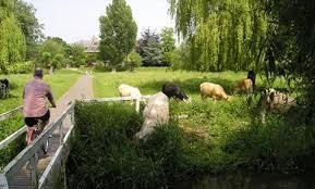 Sheep's Green