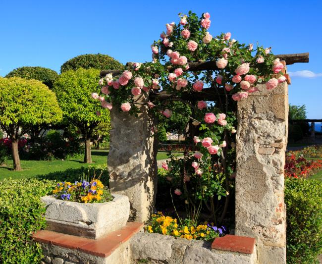 حدائق ترفيهي  حدائق  Jardin du Monastère de Cimiez