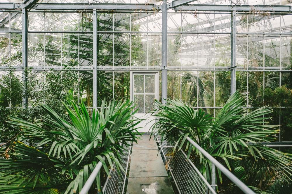3 انشطة سياحية يمكن القيام بها بحديقة هورتوس بوتانيكس في امستردام