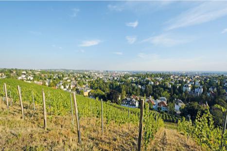 Neroberg – Der Weinberg