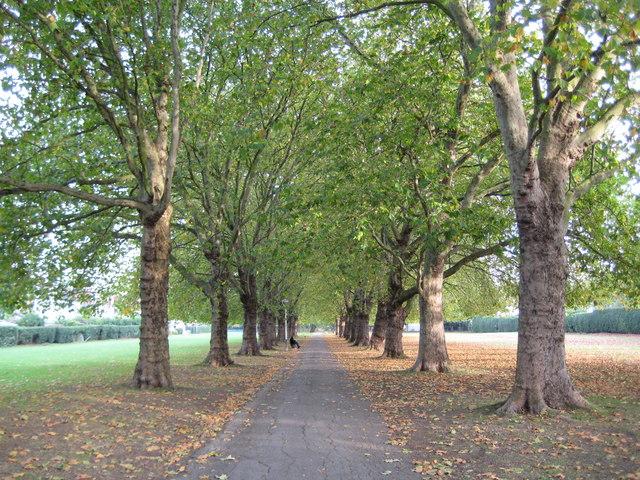 Trfihi Parks | Parks | Pitshanger Park