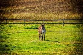 Donkey Meadow