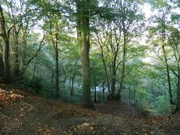 Woodbank Park