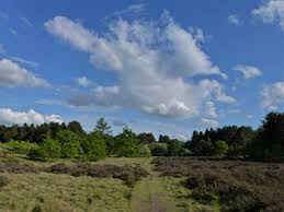 Brownhills Common Nature Reserve