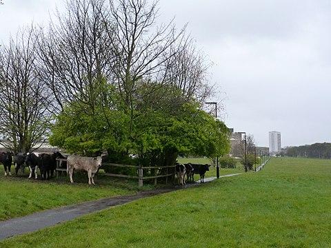 North Kenton Park