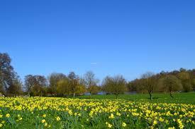 Sutton Lawn