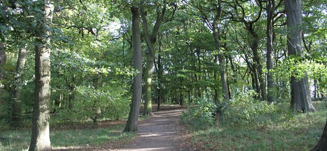 Warley Woods