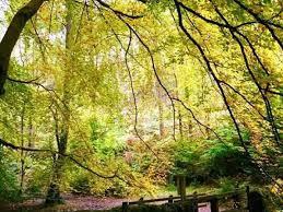 وادي ديمينجزدال وفيرنز غابات المشي