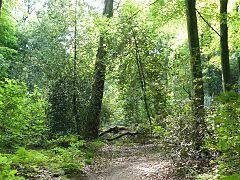 Hülsenhaine im Schellenberger Wald