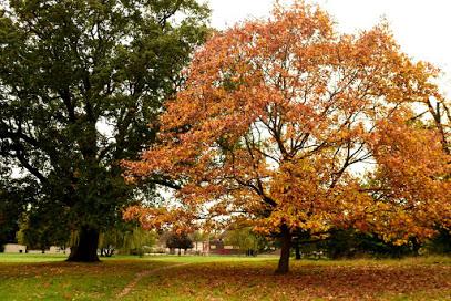 Totteridge Green