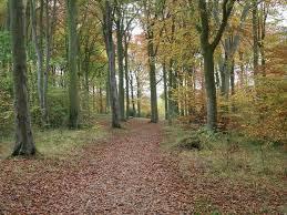 Beechwoods nature reserve