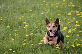 Freilauffläche für Hunde