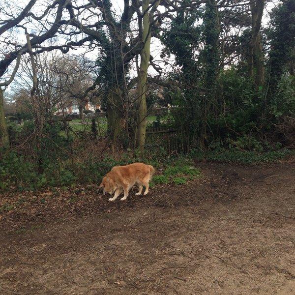Fox Wood